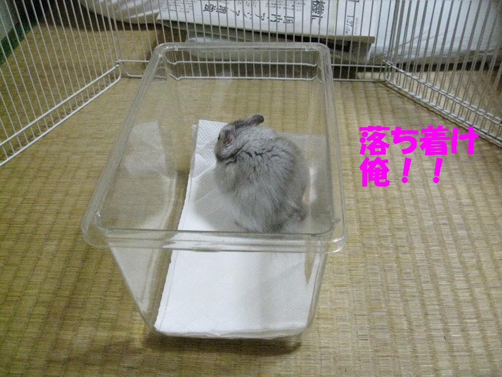 Miso0105p